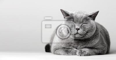 Fototapete Sleepy smiling cat laying on the floor.