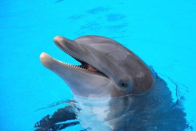 Fototapete Śmiejący się w delfin Loro Park na Teneryfie