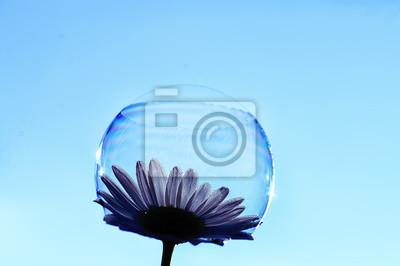 Fototapete soap bubble petal / concept nature air purity, air bubble on a flower petal