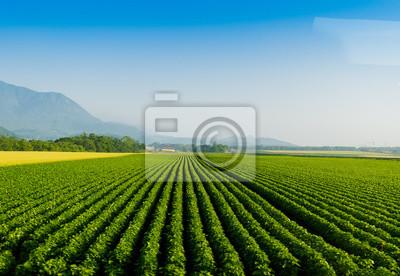 Fototapete Sojabohnen-Reihenbauernhof mit einem Traktor in Niseko Hokkaido Japan Sommer