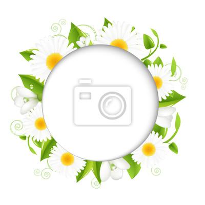 Sommer Illustration mit Kamillen