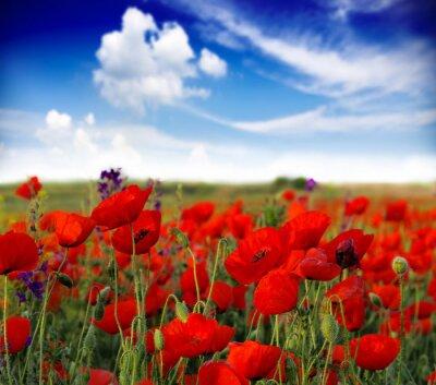 Fototapete Sommer Wildblumen