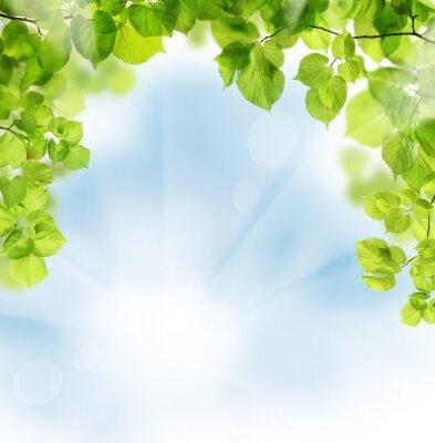 Fototapete Sommerblumenblätter auf Grün Hintergrund