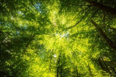 Fototapete Sonnenlicht auf Blätterdach