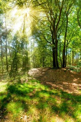 Fototapete Sonnenstrahlen brechen durch Baumkronen im Wald