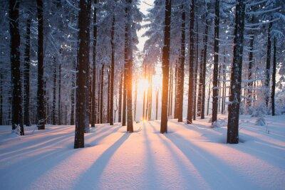 Fototapete Sonnenuntergang im Holz im Winter Zeit