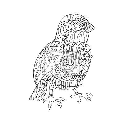 Sparrow Malbuch Buch Vektor-Illustration