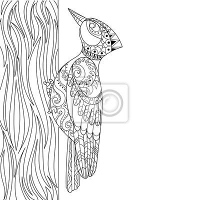 Specht färbung buch vektor-illustration fototapete • fototapeten ...