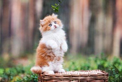 Fototapete Spielerische flauschige Kätzchen im Wald