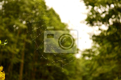 Fototapete Spinnennetz