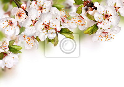 Spring Flowers Background With White Blossom Fototapete