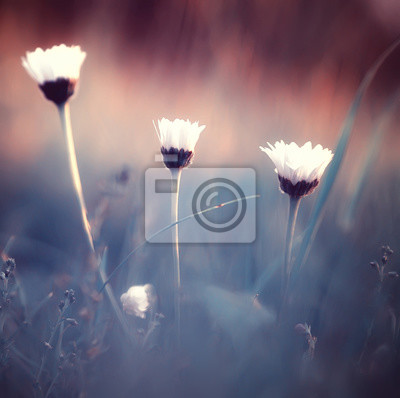 Fototapete spring or summer flowers background / vintage toning nature landscape flowers