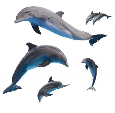 Fototapete springenden Delphinen auf weiß