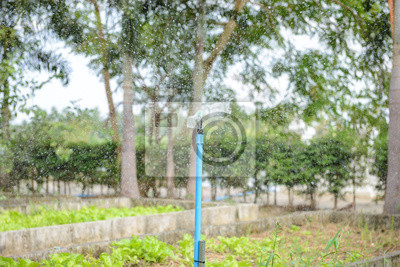 Sprinkler Garten Bewasserung System Bewasserung Rasen Fototapete