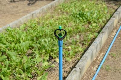 Sprinkler Garten Bewässerung System Bewässerung Rasen Fototapete