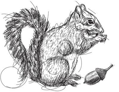 Squirrel nut sketch