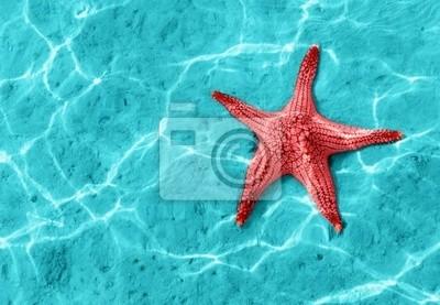 Fototapete Starfish