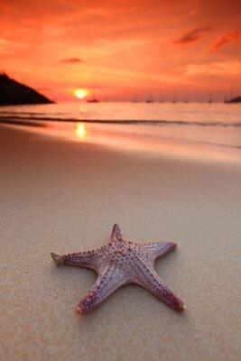Fototapete Starfish auf dem Strand