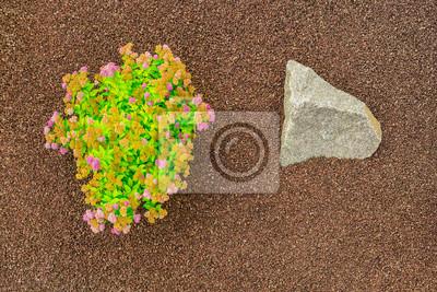 Fototapete Steingarten Aus Strauch Mit Blüten Gebrochenem Blähton Als  Granulat Und Felsen Aus Granit   Steingarten