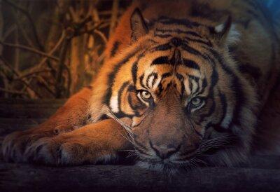 Fototapete Stillstehender Tiger