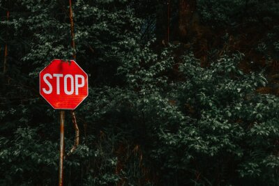 Fototapete STOP road sign in front of trees