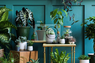 Fototapete Stylish composition of home garden interior filled a lot of beautiful plants, cacti, succulents, air plant in different design pots. Green wall paneling. Template. Home gardening concept Home jungle.