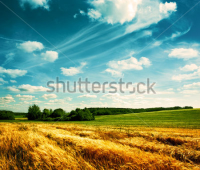 Fototapete Summer Landscape with Wheat Field and Clouds