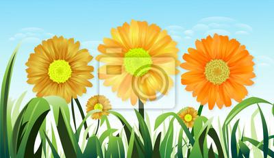 Sunflower Gelb, die Mitte des Rasens