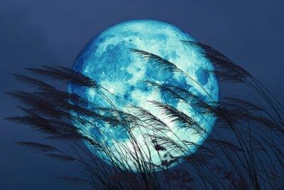 Fototapete super full harvest moon on night sky back grass flower in the field