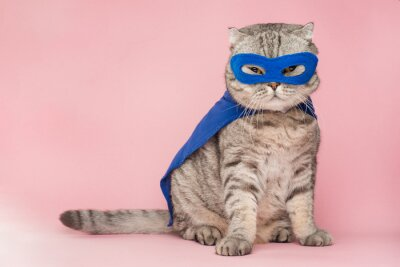 Fototapete superhero, scotch whiskey with a blue cloak and mask. The concept of a superhero, super cat, leader. On a pink background. Macho and cute cat