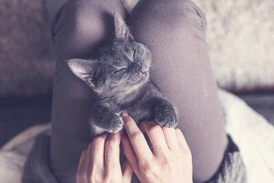 Fototapete Süßes Kätzchen macht Ein Nickerchen
