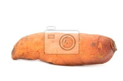 Süßkartoffel (Ipomoea batatas)