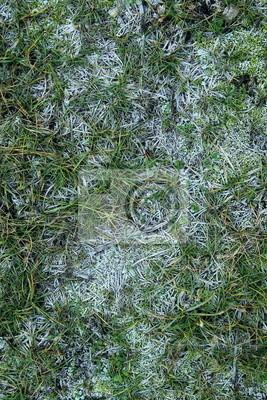 Szron na trawie