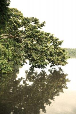Fototapete Tambopata im Freien