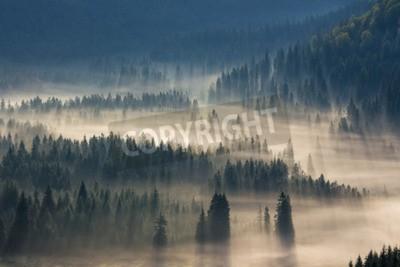 Fototapete Tannen auf einer Wiese den Willen zum Nadelwald in nebligen Bergen