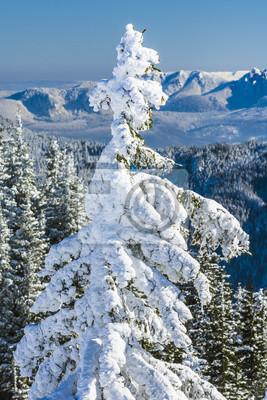 Tannenbaum Mit Schneefall.Fototapete Tannenbaum Mit Schnee Bedeckt Mit Bergen Im Hintergrund