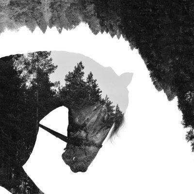 Fototapete Tannenwald im Inneren des Pferdes in der Kunst, Multiexposition