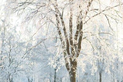 Fototapete Tapeten Bäume mit frosted Baum Zweige an einem Wintertag