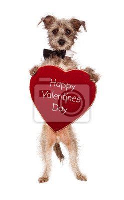 Fototapete Terrier Dog Halten Happy Valentines Day Herz