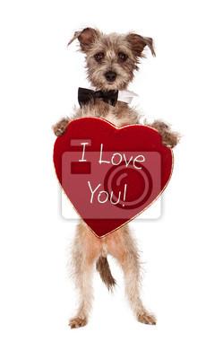 Fototapete Terrier Hund halten Ich liebe dich Herz