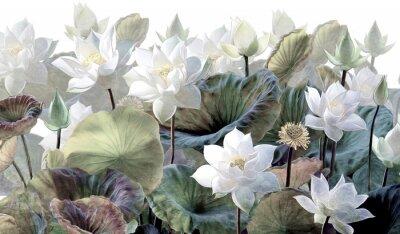 Fototapete The scenic Lotus flowers.