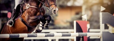 Fototapete The shod hooves of a horse over an obstacle. The horse overcomes an obstacle. Equestrian sport, jumping. Overcome obstacles.