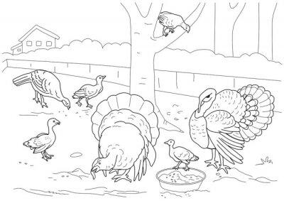 Fototapete The turkey coloring book. Farm.