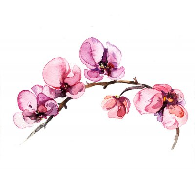 Fototapete the watercolor flowers orchid isolated on the white background