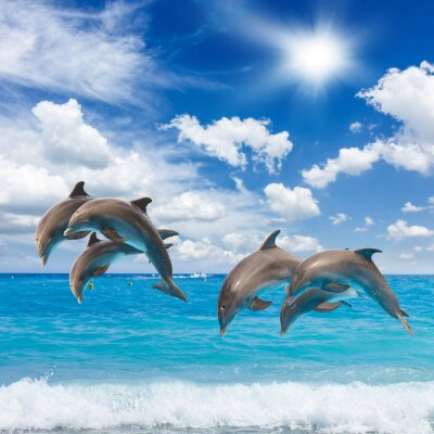 Fototapete three  jumping dolphins
