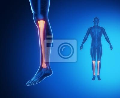 Tibia anatomy medical scan fototapete • fototapeten shinbone ...