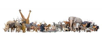 Fototapete Tier der Welt