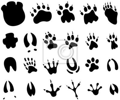 Tier Fuß