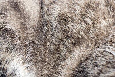 Fototapete Tierfell als Hintergrund