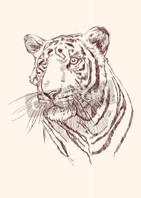 Fototapete Tiger Hand gezeichnet